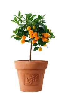 citrus splitzer faqs citrus2grow