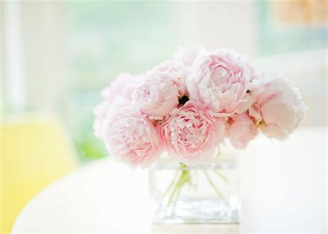 the pink peonies white and pink peonies wallpaper