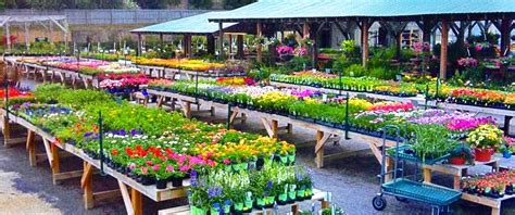Creekside Garden Center by Sale At Andy S Creekside Andy S Creekside