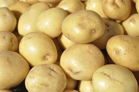 global potato fresh potatoes brf global partner inc