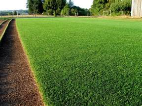 which grass seed i should buy pakistan gardening forum