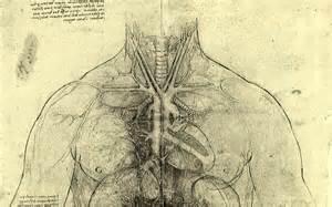 download wallpapers download 1680x1050 medicine anatomy