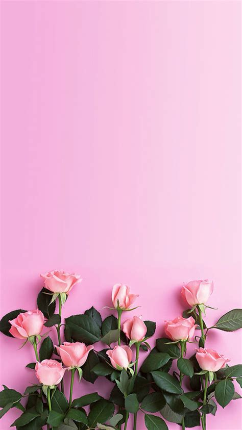 pink wallpaper for your phone pink roses download more floral iphone wallpapers at