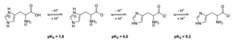 Histidine Protonation by File Proteolysis Histidine Svg Wikimedia Commons