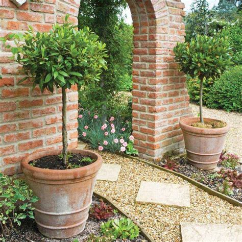 bay laurel topiary best 25 topiary trees ideas on