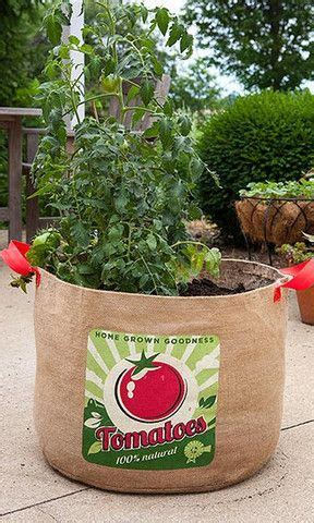 Gardeners Supply Tomato Grow Bags Best 25 Vegetable Planters Ideas On Box