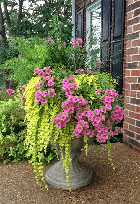 Porch Flower Pot Ideas flower pot on my front porch 2013 gardening ideas