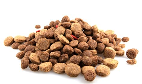 high quality puppy food the health benefits of choosing your food wisely modernist