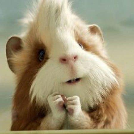 fotos graciosas de animales con frase curio sida des animalito curioso imagenes de animales imagenes bonitas