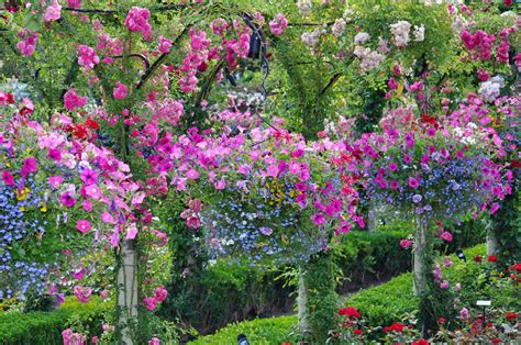 Hanging Flower Garden 70 Hanging Flower Planter Ideas Photos And Top 10