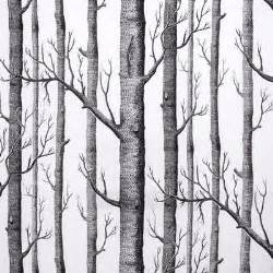 Birch Tree Wallpaper Samples