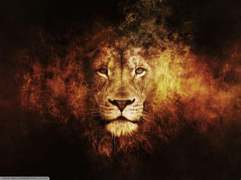 lion animals texture wallpapers hd desktop  mobile