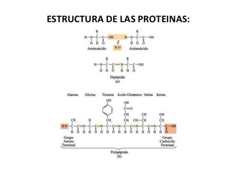 proteinas y su estructura prote 205 nas generalidades estructura clasificaci 243 n