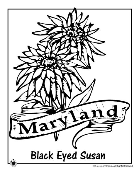 maryland state flower coloring page woo jr kids activities