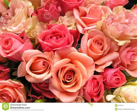 imagenes de flores libres flores rosadas rom 225 nticas fotos de archivo libres de