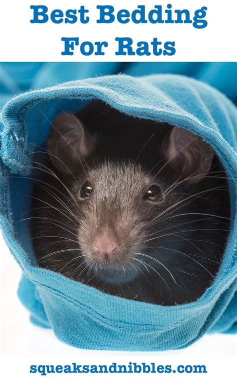 bedding for rats bedding for rats the best rat of 2017