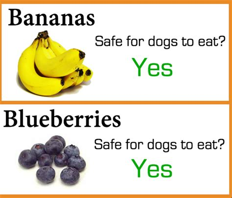 fruit for dogs what fruit can dogs eat broadsheet ie