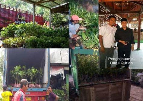 Bibit Kelengkeng Makassar jual bibit dan grosir bibit unggul murah jual