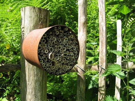Garden Hose Vs Wasp Nest Garden Hose Vs Wasp Nest 28 Images Wasp Landing Wasp