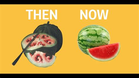 fruit 100 years ago what fruits and vegetables looked like before we