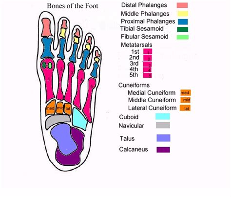 foot bone diagram table of contents