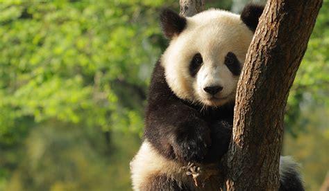 7 Great Animal Charities by Top Uk Animal Charities Learn How They Work