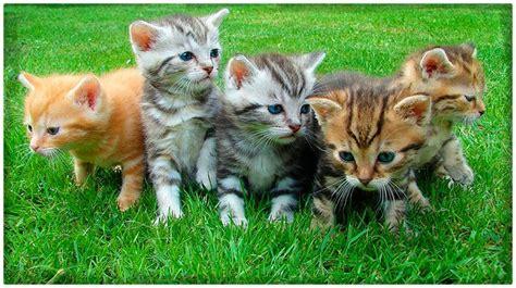 imagenes cool de gatos tiernos archivos dibujos de gatos