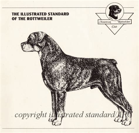 rottweiler club of america publications completed illustrated standard