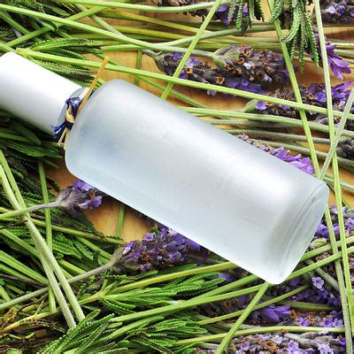 lavender oil for bed bugs 10 genius uses for lavender essential oil page 3 of 3 top 10 home remedies