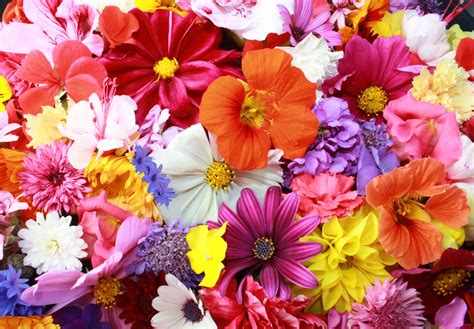 1887602 flowers background free photos