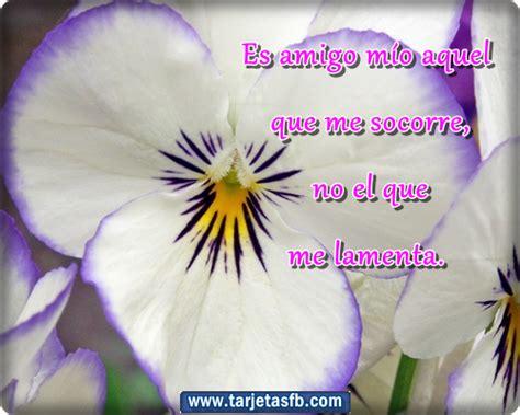 imagenes cristianas con flores imagenes de rosas con frases de amor para facebook gratis