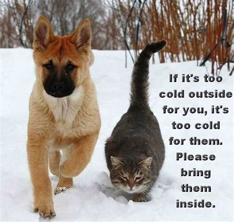 puppy cold if it s cold outside for you it s cold for them bring them inside