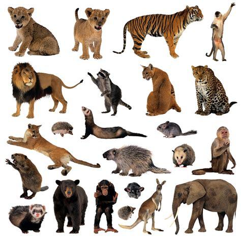 imagenes del animal weta para organismos peque 241 os reinos grandes ciencias 1