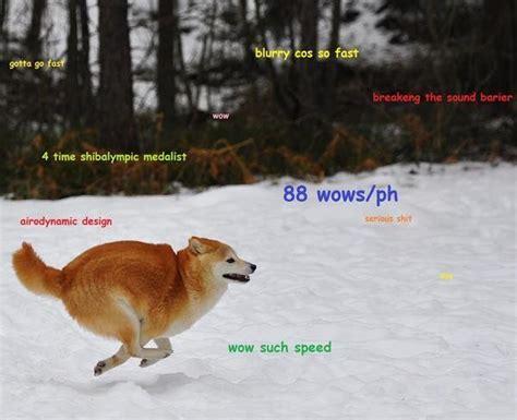 Meme Shiba Inu - fat doge google search doge pinterest doge