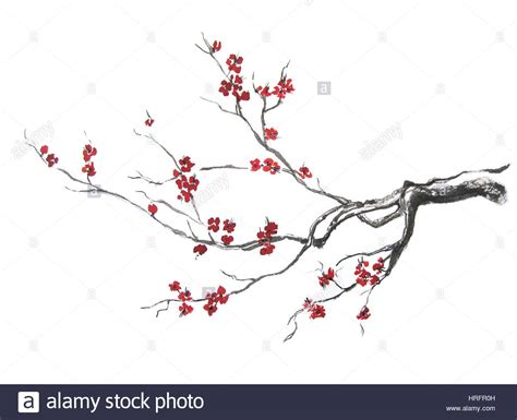 cherry blossom branch speed painting ink painting japan stock photos ink painting japan stock