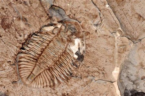 the best places for fossil the travel enthusiast