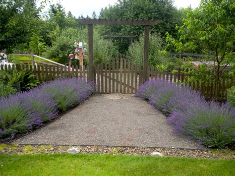 this week in the garden lavender blueberry hill crafting
