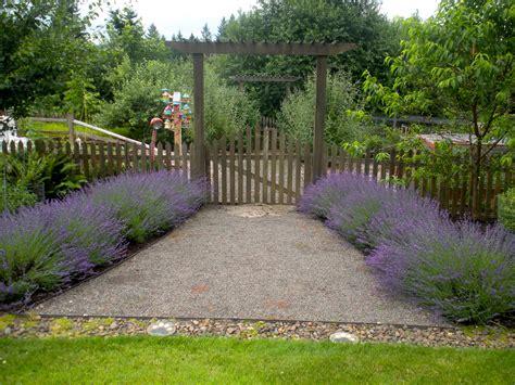 This Week In The Garden Lavender Blueberry Hill Lavender Garden Ideas