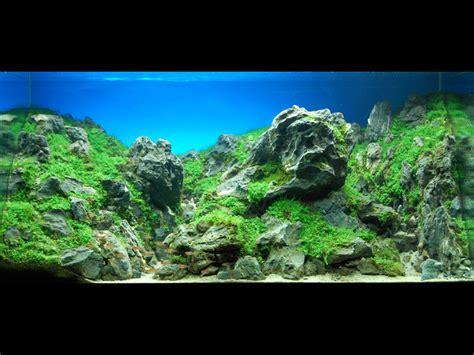 aquarium design international ltd gallery aquatic creation technologies