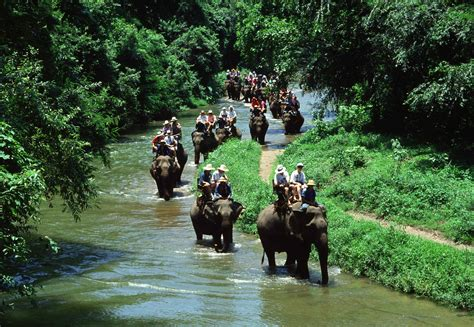 bali elephant ride tour elephant trekking bali