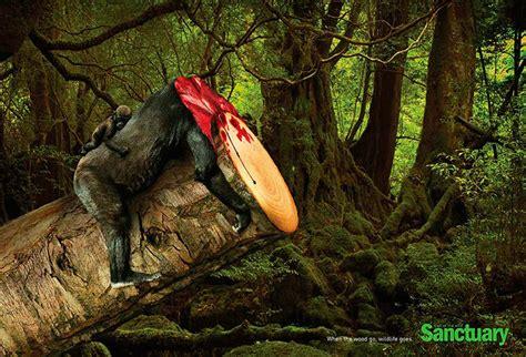 imagenes ecologicas impactantes im 225 genes contra la deforestaci 243 n