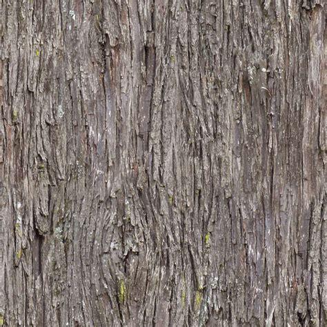 barkpine  background texture wood bark pine