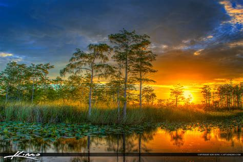 Landscape Photography In Florida Florida Wetlands Sunset Cypress Tree Landscape
