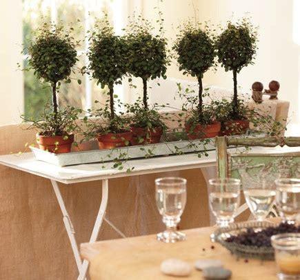 arredare casa con le piante come arredare casa con le piante idee green