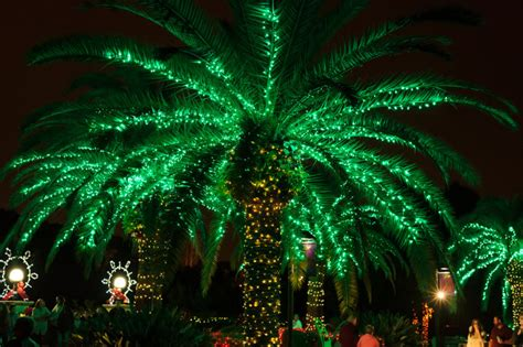16 reasons christmas in florida is the absolute best