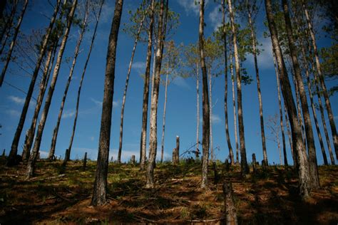 Ecological Imbalance In Nature Essay by Essay Ecological Imbalance