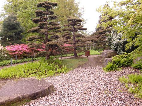 japanischer garten rasen kostenlose foto baum rasen blume park botanik