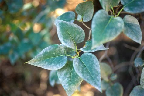 Fungal Diseases That Affect Plants - leaf and plant fungus kastle kare pest control services