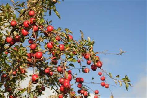 best organic fruit tree spray organic fruit tree sprays trees sprays and apples