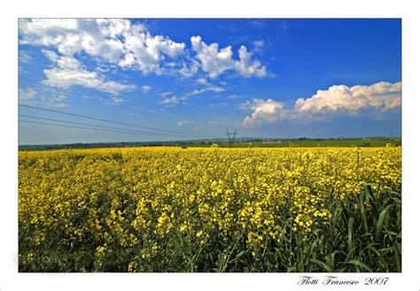 fiori gialli foto immagini paesaggi natura foto su